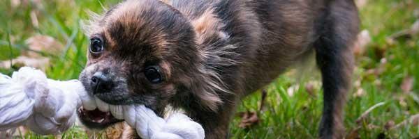 Katevia Ideoita Koiran Syntymapaivajuhlille 3 - Käteviä Ideoita Koiran Syntymäpäiväjuhlille