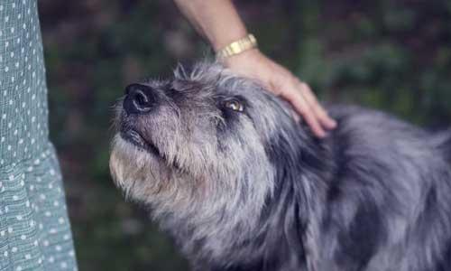Miten Suojella Koiria 3 - Miten Suojella Koiria
