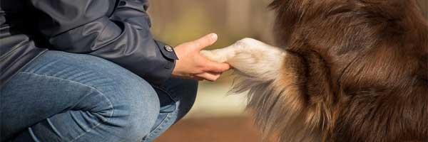 Tutkimuksen Kauneus Koiraa Hankkiessa 1 - Tutkimuksen Kauneus Koiraa Hankkiessa