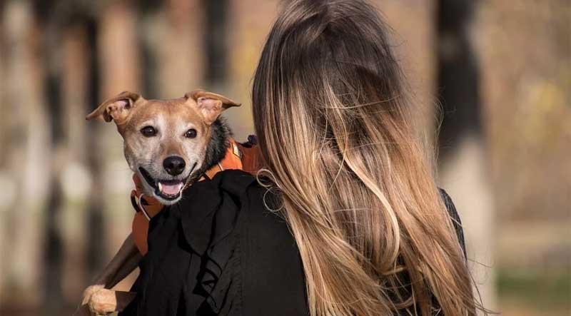 Tutkimuksen-Kauneus-Koiraa-Hankkiessa